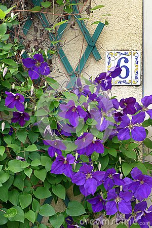 House number 6 & purple flowers