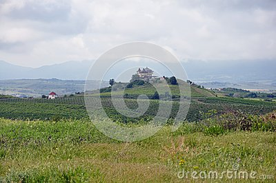 House over a vineyard