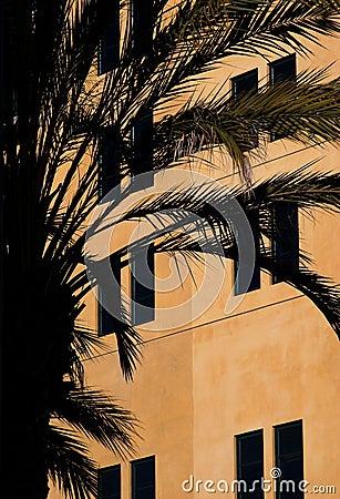 House and a palm tree