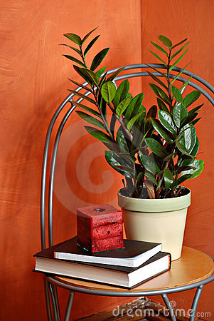 House Plant, Candle and Books