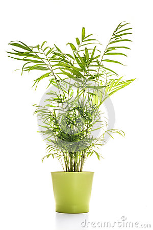 Free House Plant Isolated On White Royalty Free Stock Photos - 46158538