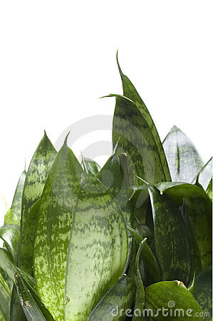 House plant isolated on white close up
