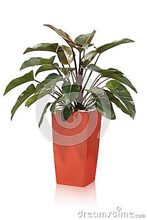 House plant – tropical