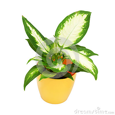 House plant in a yellow pot