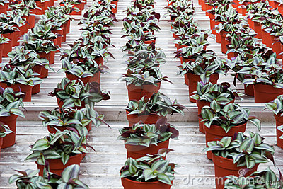 House plants in greenhouse