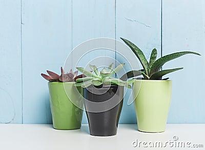 House Plants Succulents Stock Photo Image 57622092