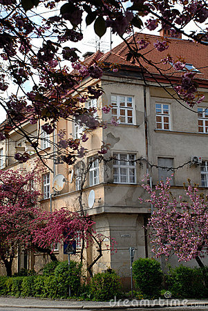 House and Sakura Trees in Blossom, Uzhgorod, UA