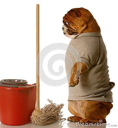 House training a dog