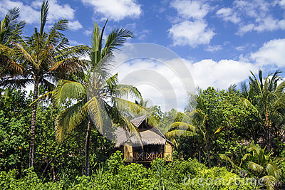 House under the palms