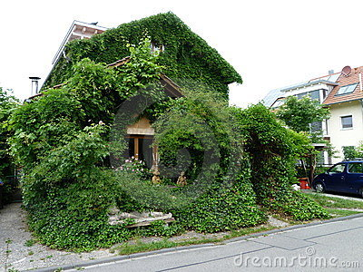 House with wine leaves and ivy Editorial Photography