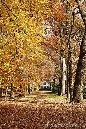 House in the woods with autumn