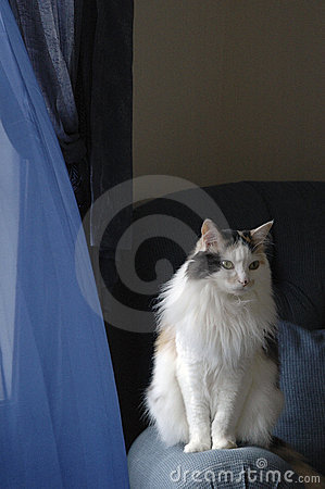 Free Housecat Stock Photo - 211870