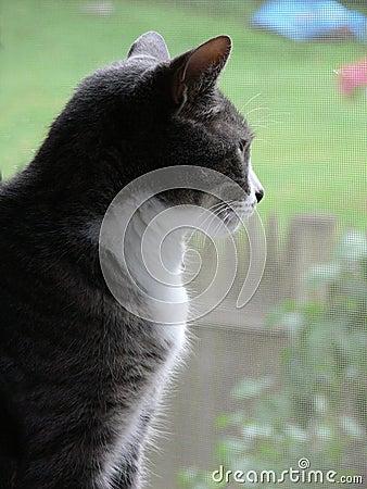 Free Housecat Peering Through Screened Window Stock Image - 921411