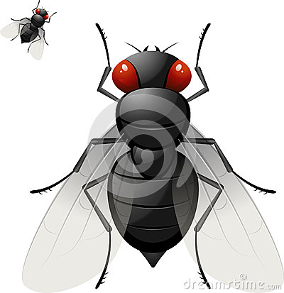 Free Housefly Royalty Free Stock Image - 25115696