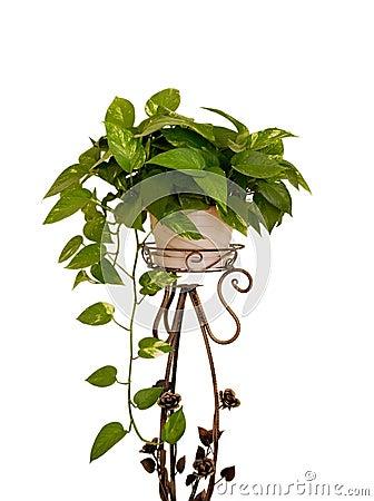 Free Houseplant On White Stock Images - 4249964