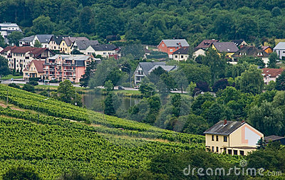Houses between forest and vineyards
