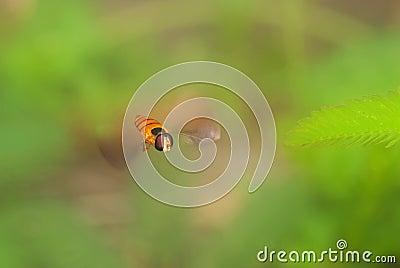 Hoverfly in-flight