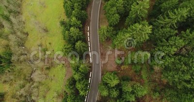 Aerial: Motion view over the road spreading through wild forest 4K stock video
