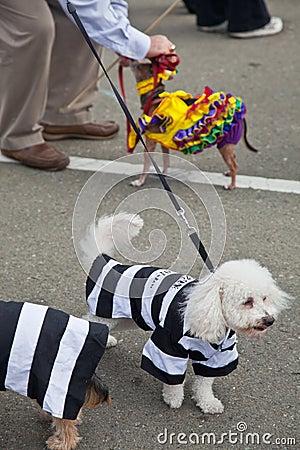 Howl oween Pet Parade & Faire Pet Editorial Photo