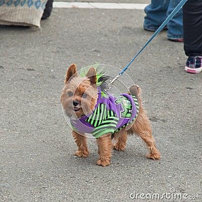 Howl oween Pet Parade & Faire Pet Editorial Stock Photo