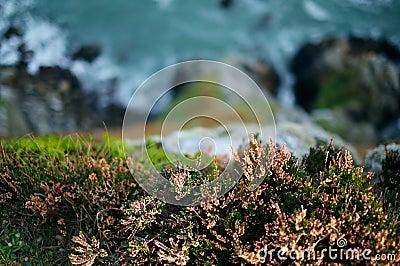 Howth Cliffs. Ireland.