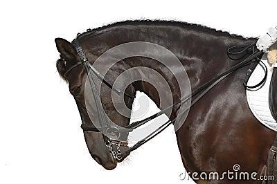 Häst isolerad white