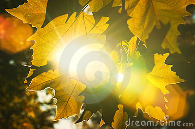 Höstclosen låter vara upp strålar suntextur