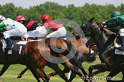 Hästkapplöpning Redaktionell Fotografering för Bildbyråer