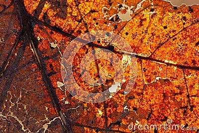 Höstlig leaf