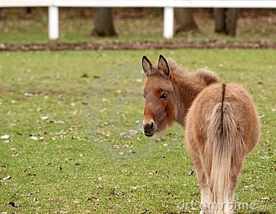 Hästminiature
