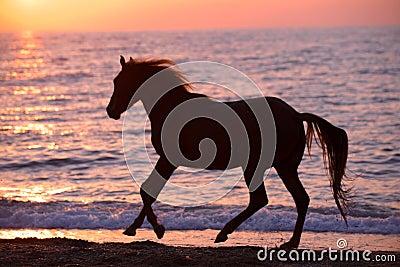 Hästspring till och med vatten