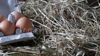 Huevos en el envase almacen de metraje de vídeo
