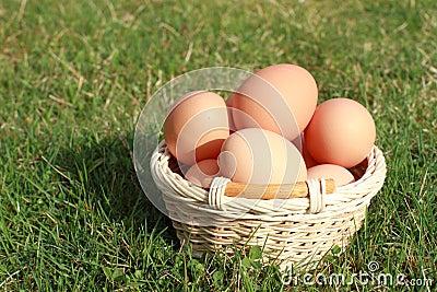Huevos en una cesta