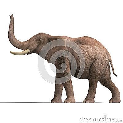 Free Huge Elephant Royalty Free Stock Photography - 9898457