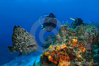 Huge Grouper and Scuba Diver