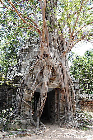 Huge roots of tropical tree on the Ta Som Gate nea