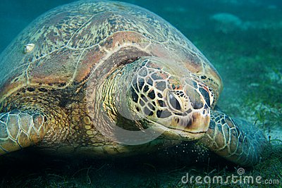 what animals eat seaweed in the ocean