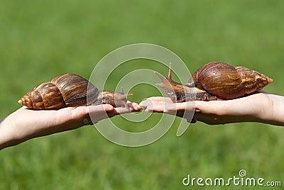 Huge snails
