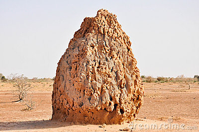 Huge Termite Cathedral in the desert