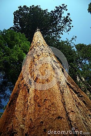 Free Huge Tree Stock Photos - 467683