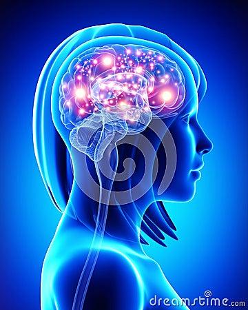Human active brain