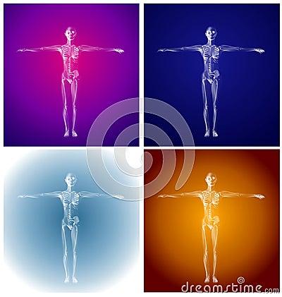 Human Anatomy Coloured Skeletons