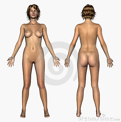 Human Anatomy - Nude Female - Front and Back