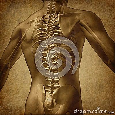 Free Human Back Grunge Texture Stock Image - 24326731