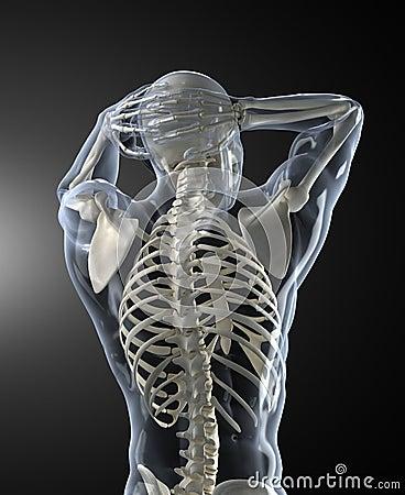 Human back Scan