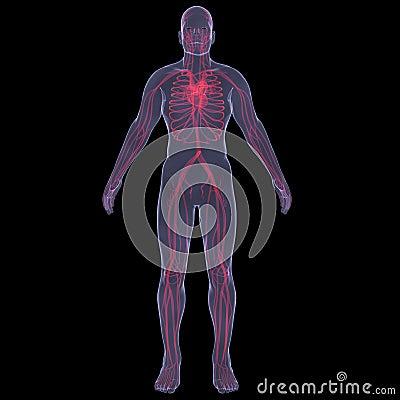 Human bloodstream