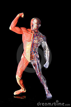 Free Human Body Royalty Free Stock Image - 2510366