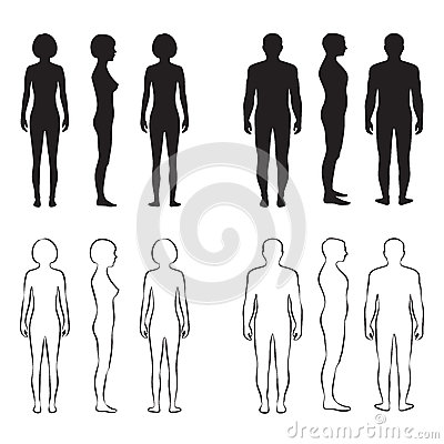 Free Human Body Anatomy, Stock Photo - 50668460