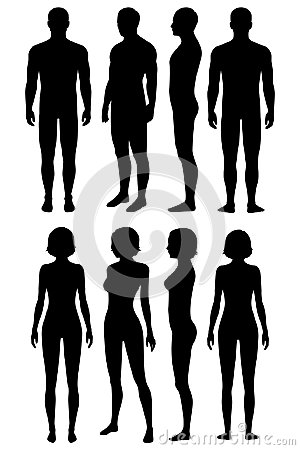 Free Human Body Anatomy, Body Silhouette Stock Image - 104717201