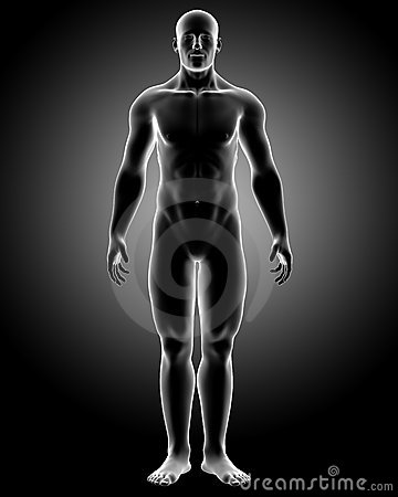 Human body with front pose